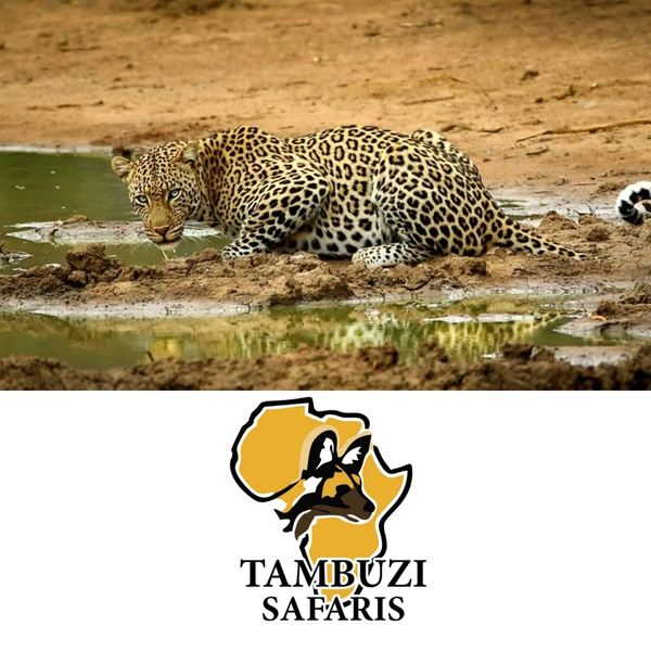 Ultimate kruger safari package - 7 days picture