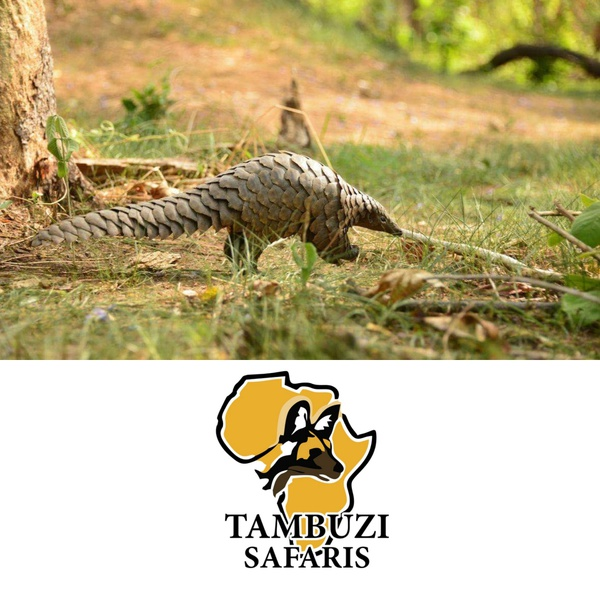 Big 5 - greater kruger safari - afternoon game drives 5 - 10 people picture