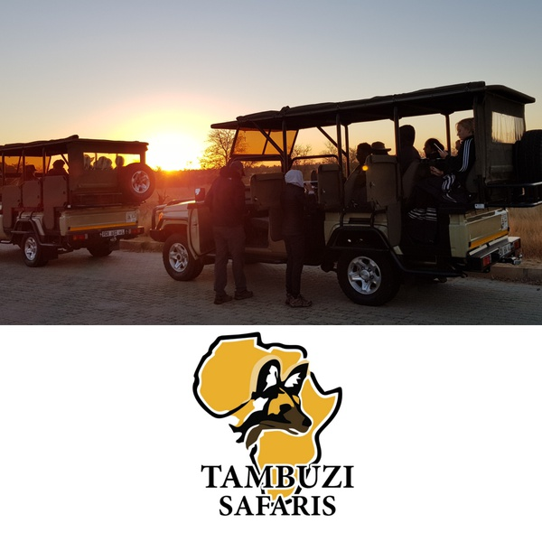 Safari packages picture