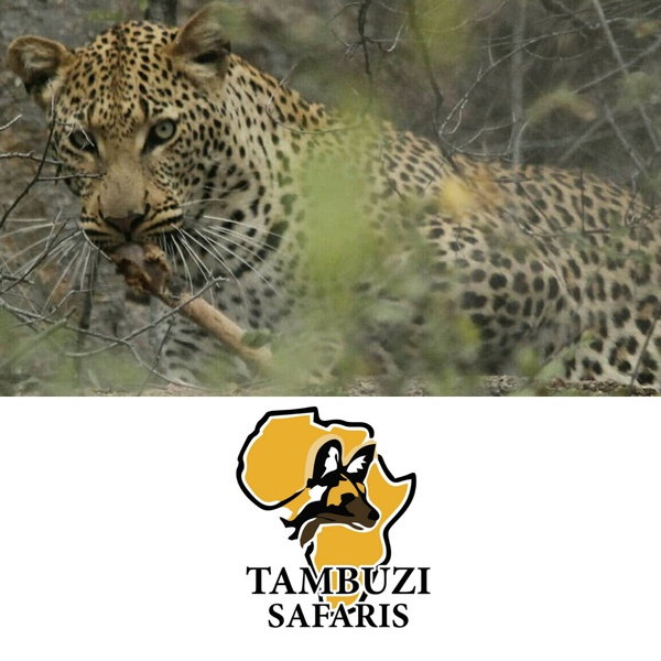 Big 5 - greater kruger safari - morning game drives 2 - 4 people picture