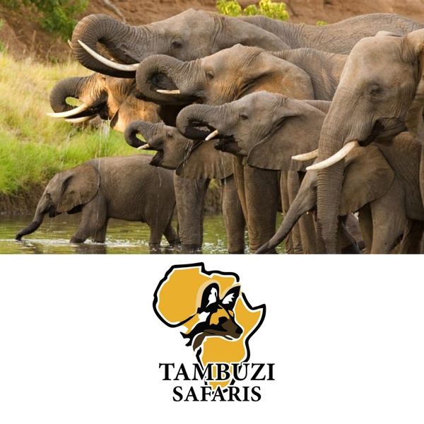 Big 5 - greater kruger safari - morning game drives 5 - 10 people picture