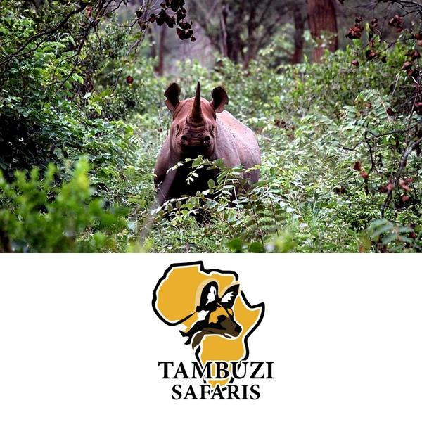 Guaranteed rhino sighting safari picture
