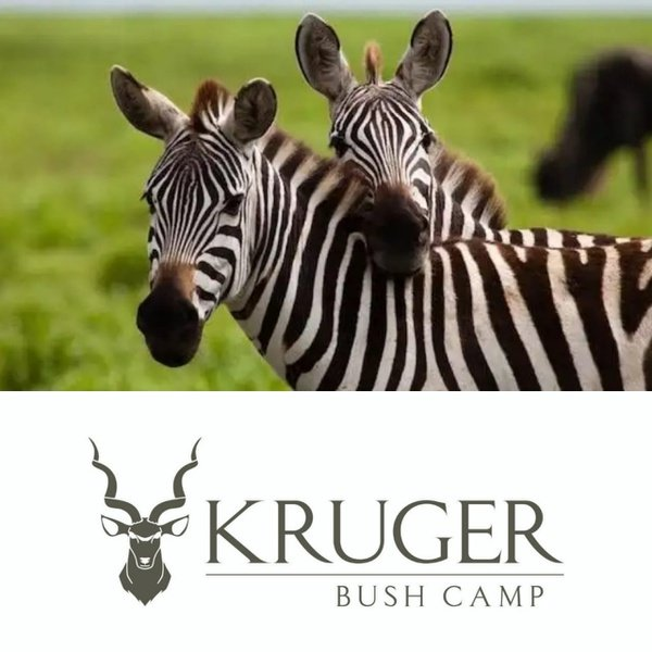 3 day rapid kruger safari package picture