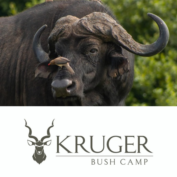 4 day classic kruger safari package picture