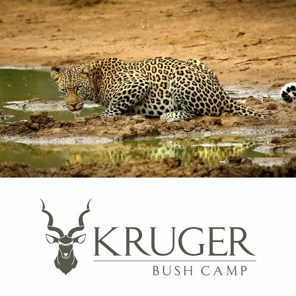 7 day ultimate kruger safari package picture