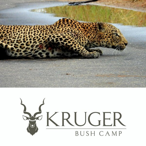 ABOUT THE KRUGER NATIONAL PARK picture