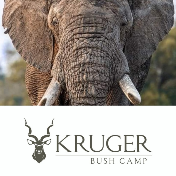 KRUGER SAFARI PACKAGES picture
