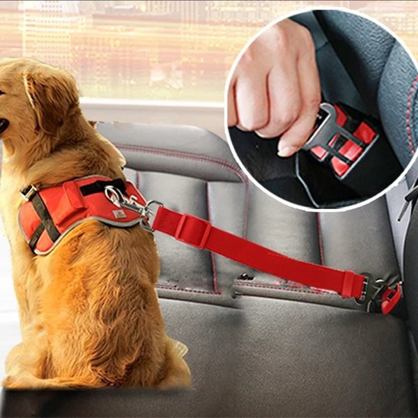 Dog or cat safety belt picture