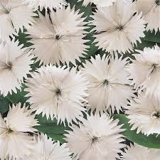 Dianthus ideal white picture
