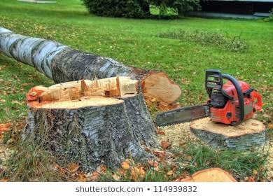 Emergency Tree Felling Call Out picture
