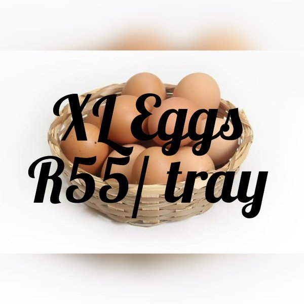 Eggs xl picture