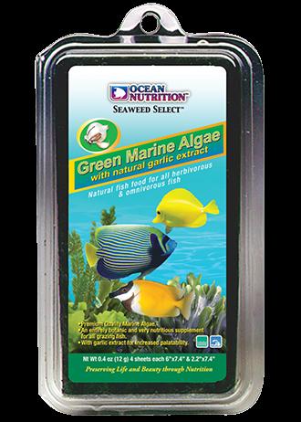 Green algae ocean nutrition picture
