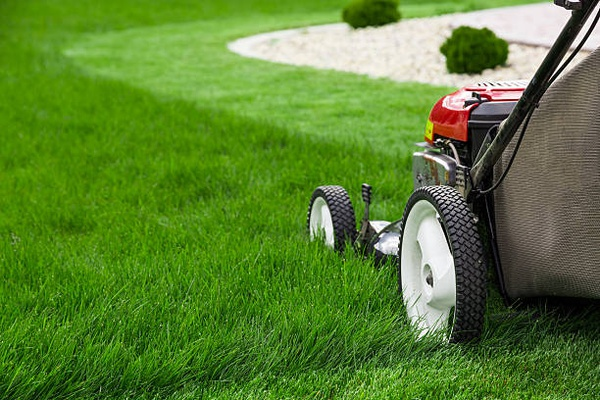 CG Lawn Care & Garden Services picture