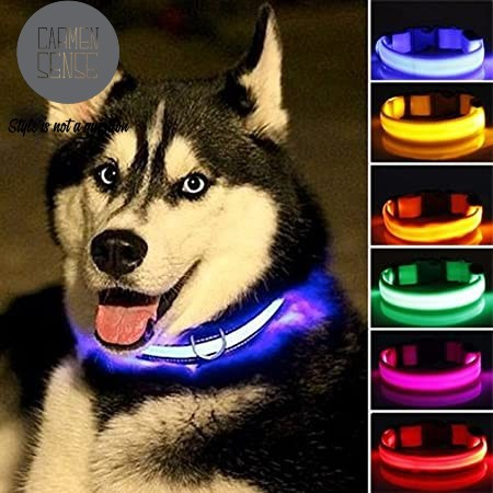 Led dog collar picture