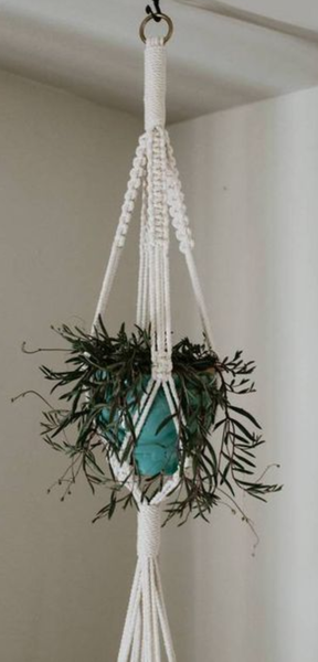 Plant hangings picture