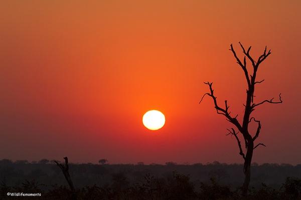 African bushveld sunrise #1 picture