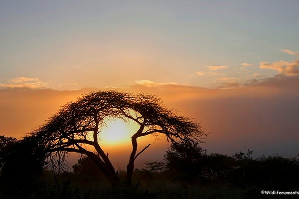 African bushveld sunset #1 picture