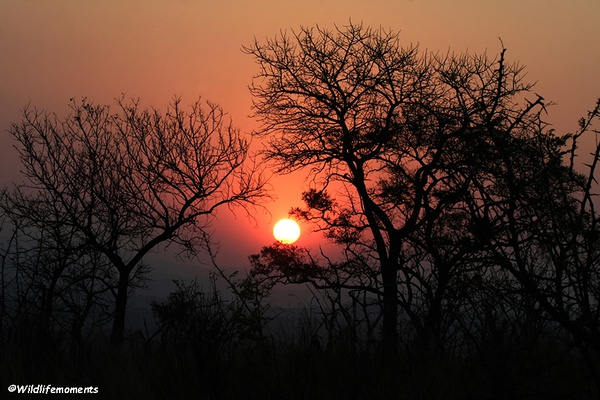 African bushveld sunset #2 picture