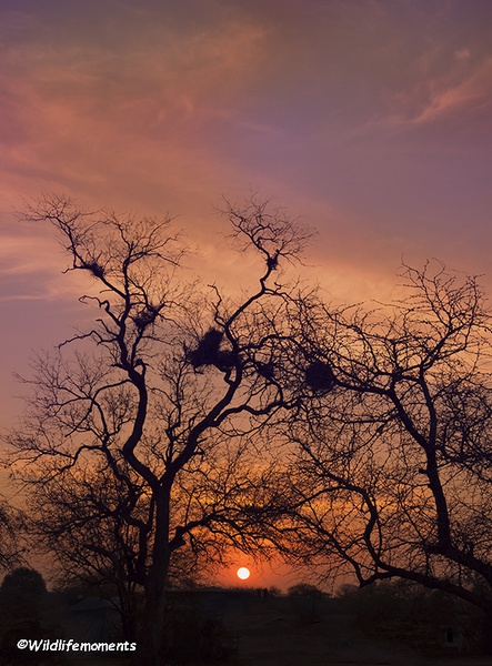 African bushveld sunset #3 picture