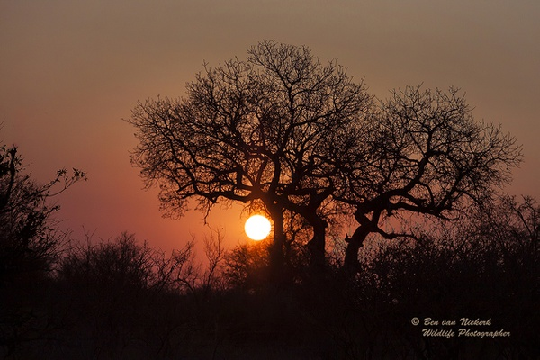 African bushveld sunset #4 picture
