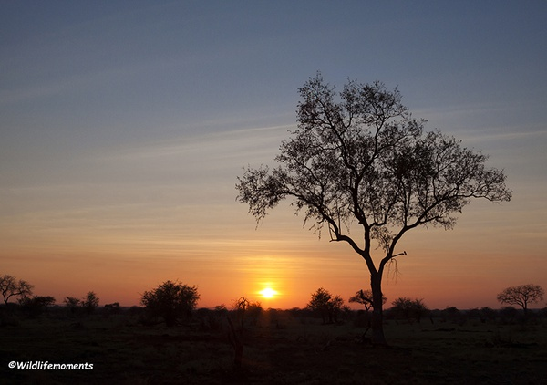African bushveld sunset #5 picture