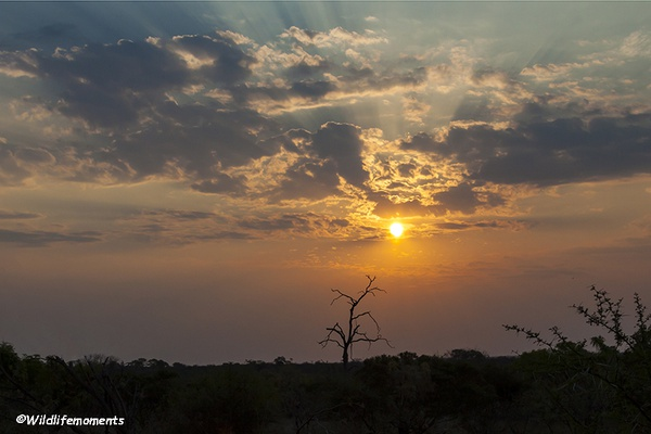 African bushveld sunset #6 picture