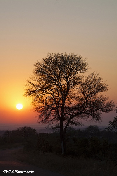 African bushveld sunset #8 picture