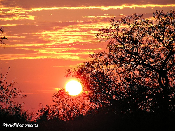African bushveld sunset #9 picture