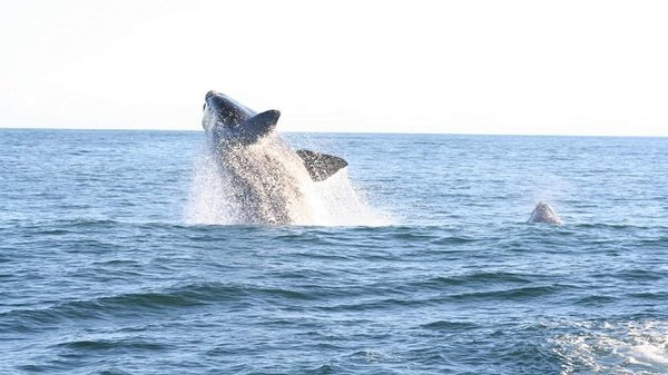 Whale watching tour picture