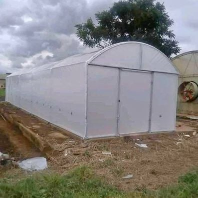 Greenhouse tunnels picture