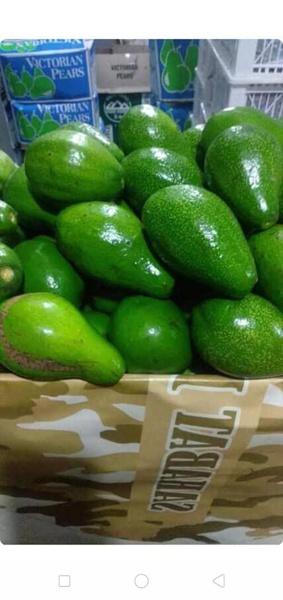 Avocado picture