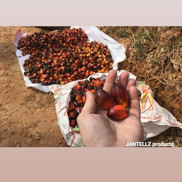 Palm fruit picture