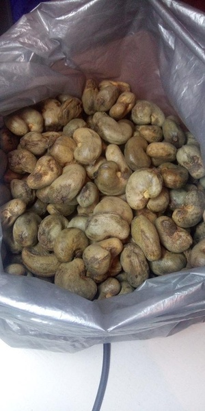 Raw cashew nuts picture