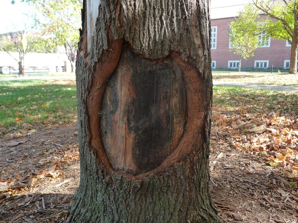 Physical tree wound Repair picture