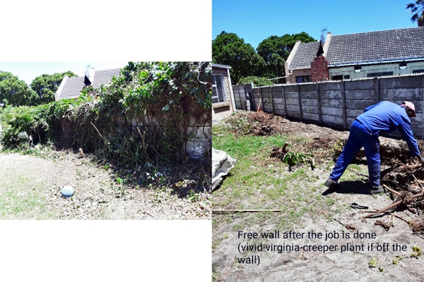 PLOT cleaning picture