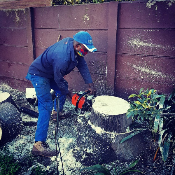 Treefelling services in capetown South Africa picture