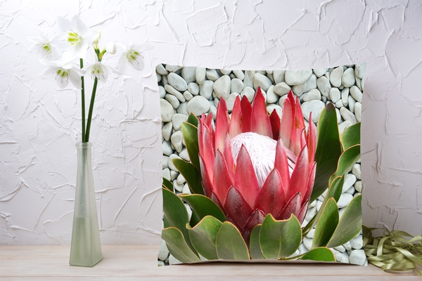 C016 cushion picture