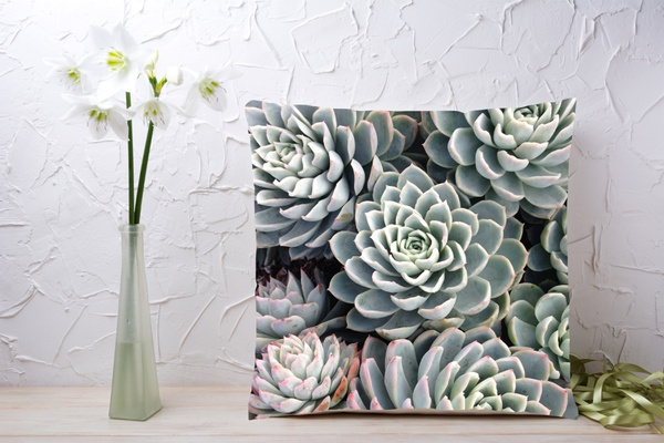 C022 cushion picture