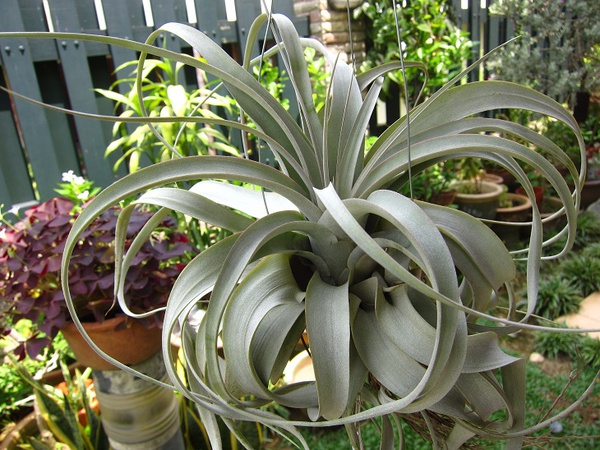 "Xerographica 9"" - extra large picture"