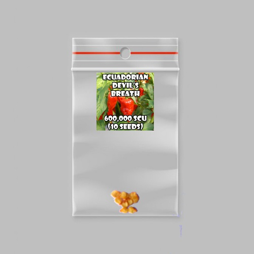 Ecuadorian devil's breath chilli-pepper - 600,000 scovilles (10 seeds) picture