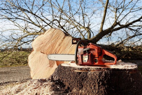 Tree felling picture