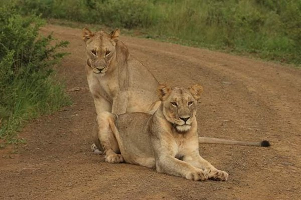 Pilanesberg Wildlife picture