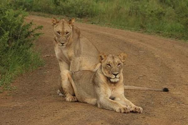 Lion Park Tour picture