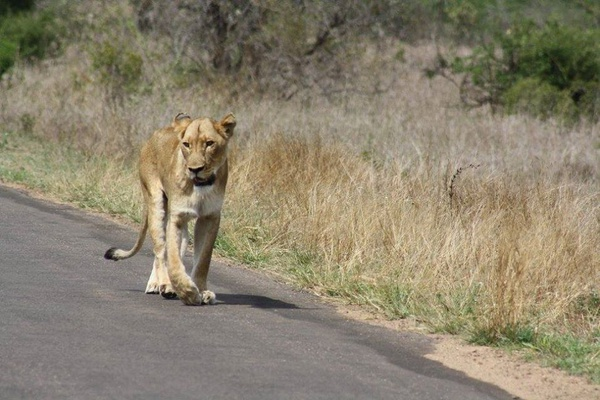 10 day self drive kruger park picture