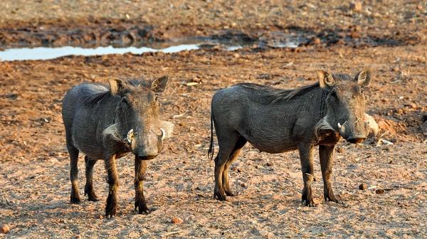 22 day cape town, nambia safari picture