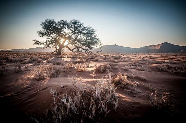 22 day cape town, botswana, namibia, victoria falls safari picture