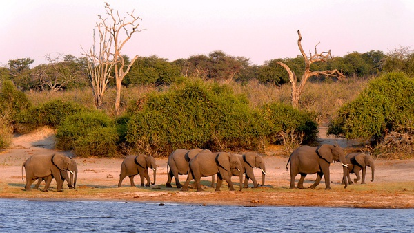 17 day self drive guided botswana namibia picture