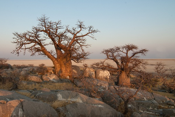 20 day cape town, botswana safari picture
