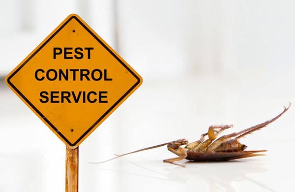 Pest control service picture