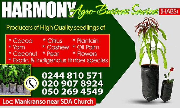 Producer of high quality seedlings. picture